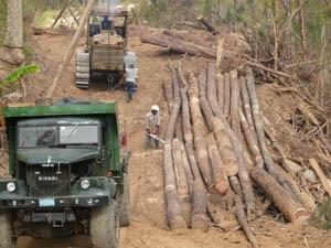forestales_gran_piedra-baconao_02