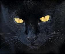 gato-negro